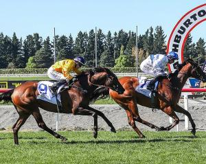 Kali cruises to the line at Ashburton.PHOTO: RACE IMAGES SOUTH