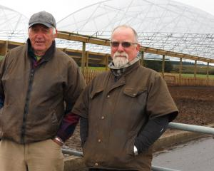 Waikite property owners Brian Webster (left) and farm manager Stuart Browning, have turned their...
