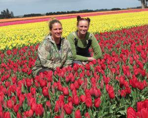 Taking a brief break among the stunning 15ha paddock of tulips on the Dacre-Lorneville Rd, are,...