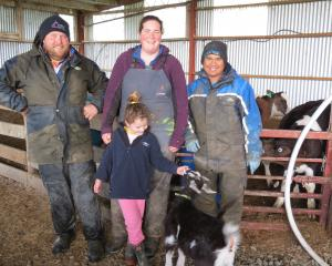 Calving is in full swing. Balfour 50/50 sharemilkers (from left) Nick and Anieka Templer, with...