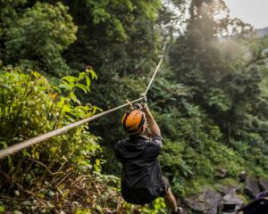 A proposed zipline venture for the Hokitika Treetop Walkway has bypassed the hearing stage. ...