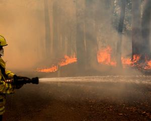 A Gloucester fire crew member fights flames from a bushfire at Koorainghat, near Taree in the Mid...