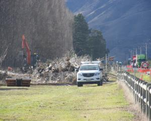 Contractors remove poplar trees from the side of SH6 near Cromwell earlier this year. PHOTO: ADAM...