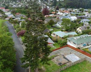 Neighbours are fighting to save a 34m-high European silver fir tree that towers over Ferntree Dr...