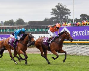 Media Sensation, winner of last year's New Zealand 1000 Guineas, will start favourite in the...