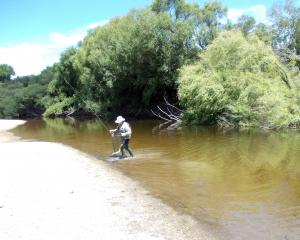 Murray Smart used a willow grub to catch a good-sized trout on the lower Taieri River. Photo:...
