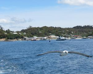 Stewart Island businesses are optimistic about the Government's $3.16million grant from the...