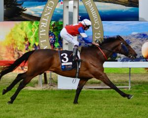 Camino Rocoso wins yesterday's Cromwell Cup thanks to a masterful ride by Canterbury jockey Chris...