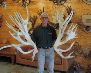 These antlers came from a stag named after one of the Hakataramea Valley's best-known sons. Photo...