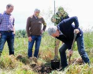 Agriculture Minister Damien O'Connor plants a tree to celebrate the Government's investment in...
