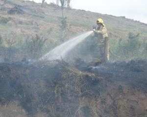 A firefighter battles an out-of-control burn-off in Beach Rd in Oamaru yesterday. Photo: Daniel...