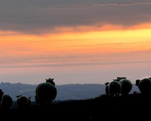 The strong-wool industry has been described as being at an exciting new beginning. Photo: Stephen...