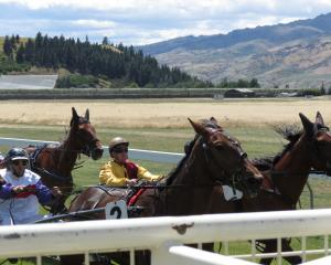 Lining up, ready to start the second race at the Wyndham Harness Racing Club's race day are (from...