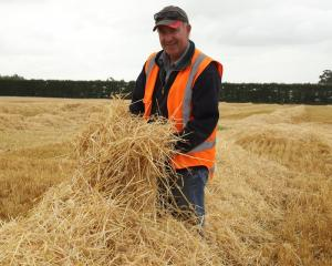 Mid Canterbury Vintage Machinery Club president John Stewart says the latest barley straw harvest...