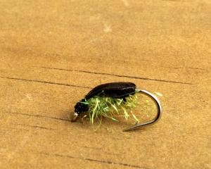 A diving beetle imitation. Photo: Mike Weddell