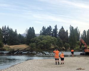 Staff monitor a big poplar tree as it nears the Clutha River's far riverbank, winched by an...