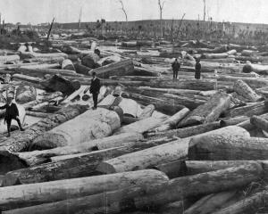A valuable collection of kauri logs on Awakino Creek, near Dargaville, Northland. — Otago...