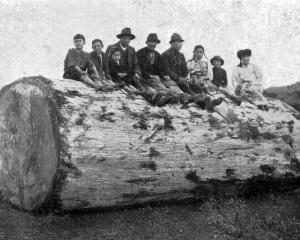 A group of Hokianga Maori seated on a section of a large kauri log. — Otago Witness, 6.1.1920.