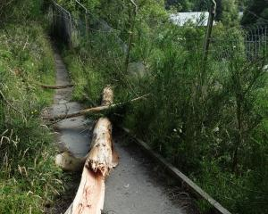 Part of a tree that fell across a public walkway into the Kiwi Birdlife Park in Queenstown,...