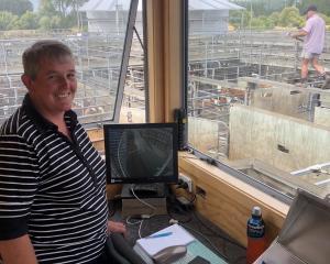 Anna Munro at work at the Temuka saleyards. Photo: George Clark