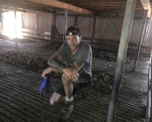 Rodney Robinson travels the South Island cleaning out manure from woolsheds. Photos: Alice Scott