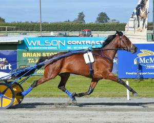 Zoned Scarlett cleared out to win the feature trot at Ascot Park for trainer-driver Brad...
