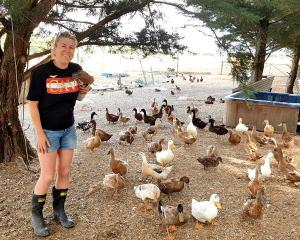 Kim Hartley with some of her ducks Photo: RNZ/Cosmo Kentish-Barnes