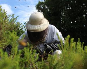 With a slow start to wasp season, Geoff ''the bee man'' Scott expects more callouts to...