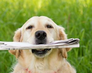 TVNZ is casting out the net for talented dogs and their owners to sign up for a new TV series....