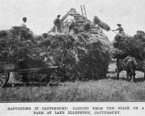 Harvesting in Canterbury. Carting from the stack on a farm at Lake Ellesmere. — Otago Witness, 24...