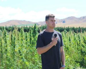 The Brothers Green co-founder Brad Lake speaking on a Culverden hemp farm. Photo: RNZ