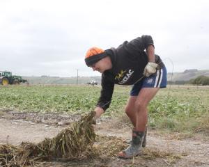 Wyndham Rugby Football Club member Kieran Anderson, of Hedgehope, helps clear debris off damaged...
