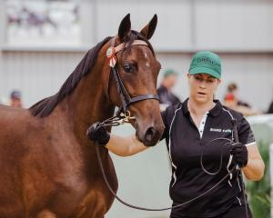 Yesterday's $280,000 sale-topping yearling, by Bettor's Delight from Pemberton Shard, goes...