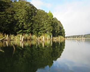 Trees and stumps reflected in the clear water of Rodger Inlet on Lake Monowai.