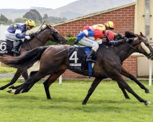 Mr Intelligence (obscured, inner) and Sitarist, who formed the quinella in the Dunedin Gold Cup,...