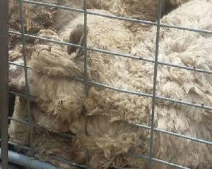 Ian Galpin had to bury 33 dead sheep after a roaming dog attacked and killed the stock. Photo /...