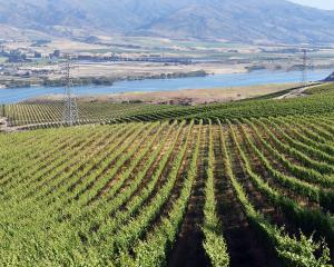 Most wineries, including Misha's Vineyard above Lake Dunstan (pictured), use traditional...