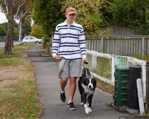 Cole Mercer from Shirley walks his dog Max, a border collie/huntaway cross on Hills Rd. Photo:...