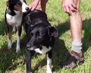 Hunting dog Fern (front) is checked over after she fell down a large sinkhole near the Fox River...