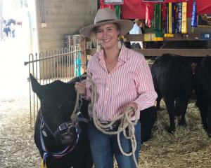Caitlin Rhodes led Ausline cattle from Well Station, near Canberra, during the recent Canberra...