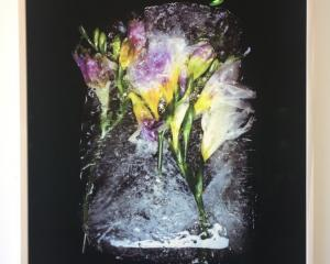 Freesia, by Jon Thom