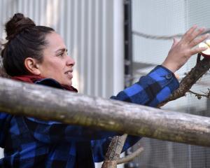 Dunedin Botanic Garden aviary curator Alisha Sherriff feeds the birds in the aviary last week....