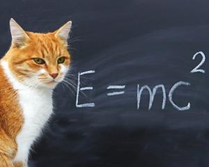 Make like a cat, or Einstein, and show some curiosity. It's likely to be good for you. Photo:...