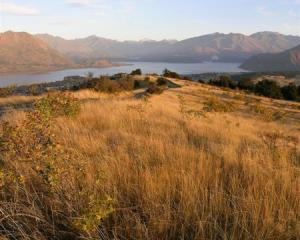 Lake Wanaka seen from the top of Mt Iron. Photo by Marjorie Cook.