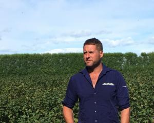 South Canterbury blackcurrant grower Hamish McFarlane. PHOTO: SUPPLIED