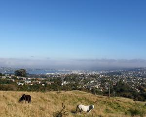 The view across Dunedin from Patmos Ave. PHOTO: CLARE FRASER