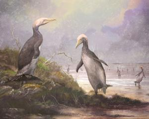 Plotopterids like these Copepteryx looked remarkably like penguins. Image: Mark Witton