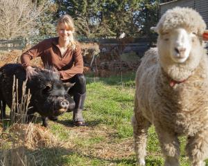 Siana Fitzjohn with her KuneKune pig Splodge and sheep Little Hope. Photo: Geoff Sloan