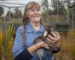 Anne Richardson with 'Hunter' a blue duck. Photo: Geoff Sloan