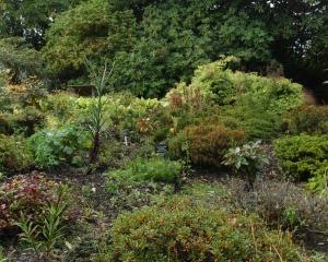 Rhododendron Dell at Dunedin Botanic Garden.PHOTO: ODT FILES